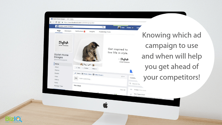 Image: Facebook business page with photo of a grey tabby kitten, Text reads Knowing which ad campaign to use and when will help you get ahead of your competitors!